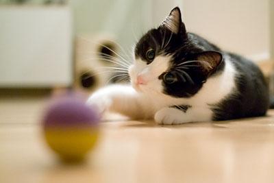Katten P